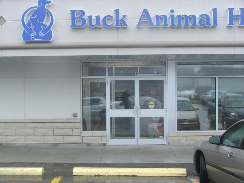 Window film installed at an Animal Hospital